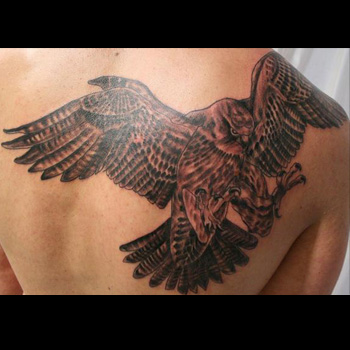 Get hold of Essential Falcon Tattoos Designs
